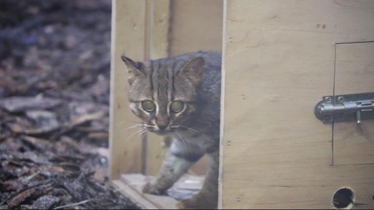 Wrocław. Najmniejszy kot świata przyjechał do zoo