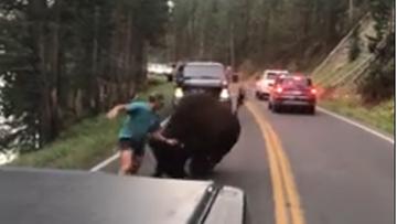 Chciał walczyć z bizonem, bił się z turystami. Amerykanin jeździł po parkach i robił awantury